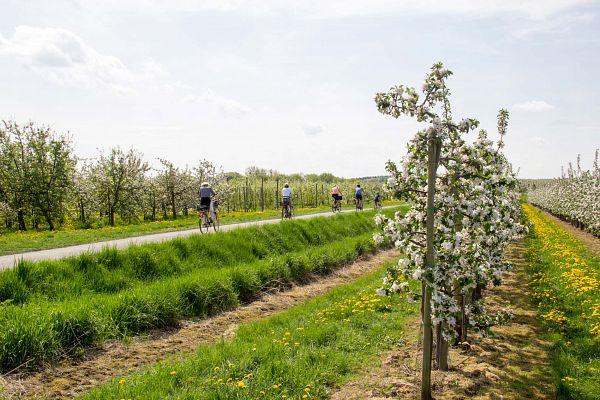 Die rheinische Apfelroute